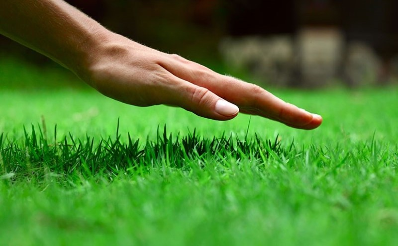 Maintain Your Lawn Regularly