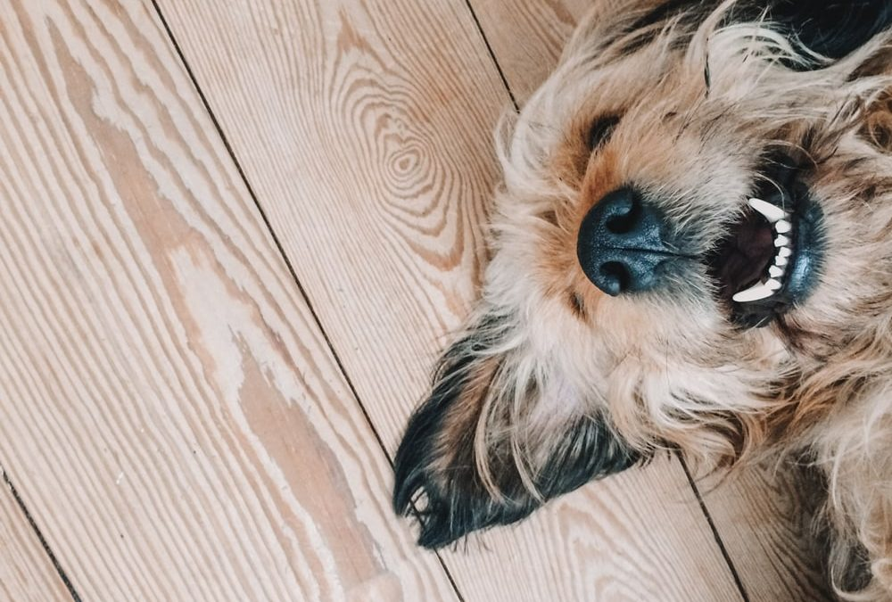 Demand for pet friendly properties on the rise