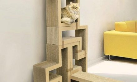 Get Cat Trees for Your Large Cat