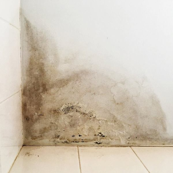 Check Out for Mold