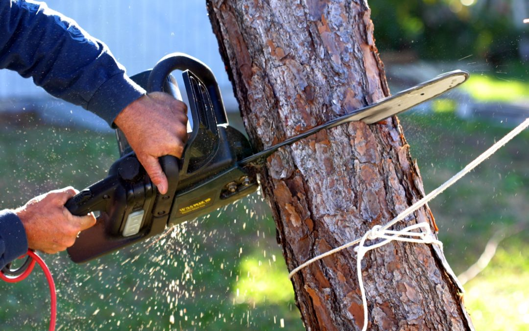 What Is The Ideal Way Of Removing A Tree Safely