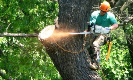 Things to Consider When Removing Huge Trees Around Your House