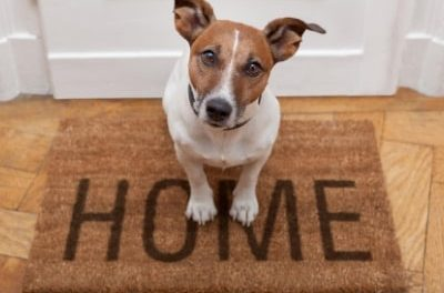 Pressure on for pet-friendly lets as Build To Rent operators cash in