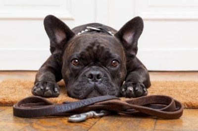 Paws for controversy – government wants pet-friendly tenancy contracts