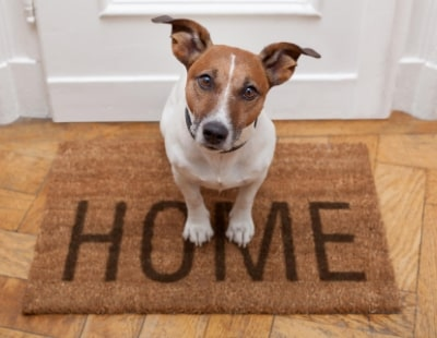 Agents beware: Students-with-pets are becoming more common…
