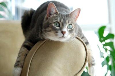 Pets in lettings properties – key topic at today's ARLA webinar