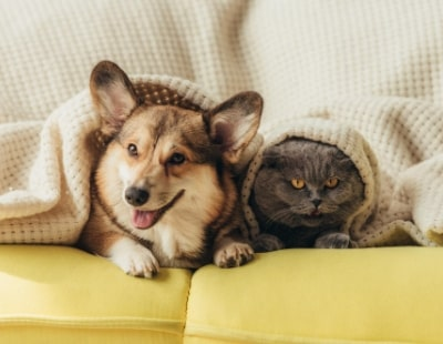 Pets in Rentals: Agency says buy to lets are lagging behind